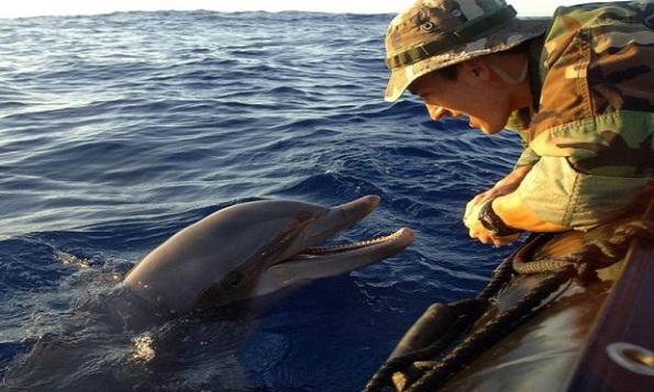 dolphin-0